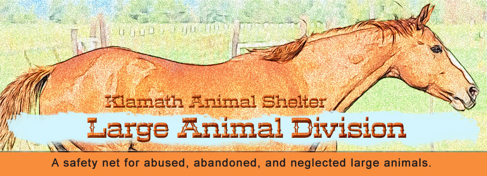 Klamath Animal Shelter/Large Animal Division